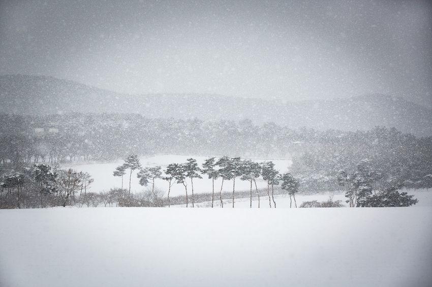 눈오는 날 Korea EyeEmNewHere EyeEm Selects Gochang Winter Snow Cold Temperature Tree Landscape No People Nature Outdoors Snowing Beauty In Nature
