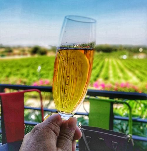 Sparkling Wine Human Hand Wineglass Drink Alcohol Wine Drinking Glass Close-up Sky Food And Drink Winetasting Winery