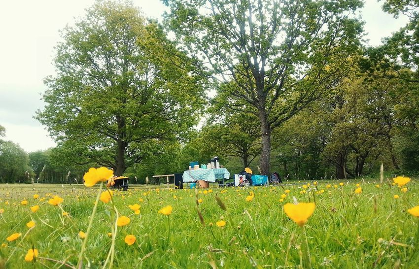 Turning a Field into a Wildflower garden... Newtown Powys Wales Buttercups Picnic Powys Community Project Flora лютики...весна