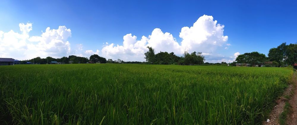 away from the metro. Rlm12 Nueva Ecija Philippines Abundance Rice Field Nature A New Beginning Tree Agriculture Rural Scene Field Summer Beauty Agricultural Field Crop  Rice Paddy Farm