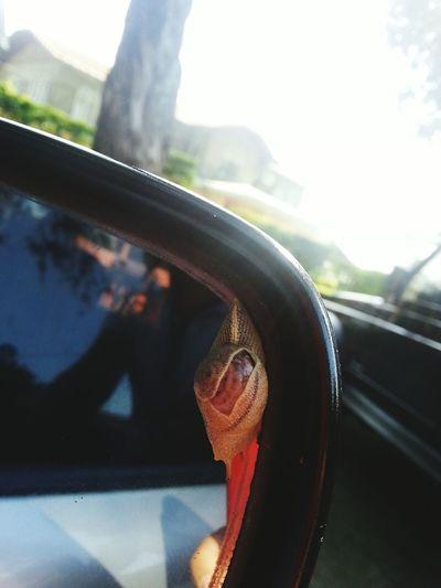 Snail At My Side Mirror.. Snail Side Mirror Shots Car Shadow
