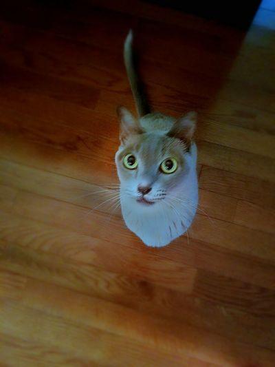 This is Aslan.