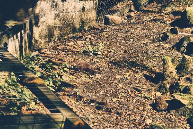 Animal Themes Day Domestic Animals No People Outdoors Shadow Sunlight Sunny Surface Level Tranquility Weathered Zoology