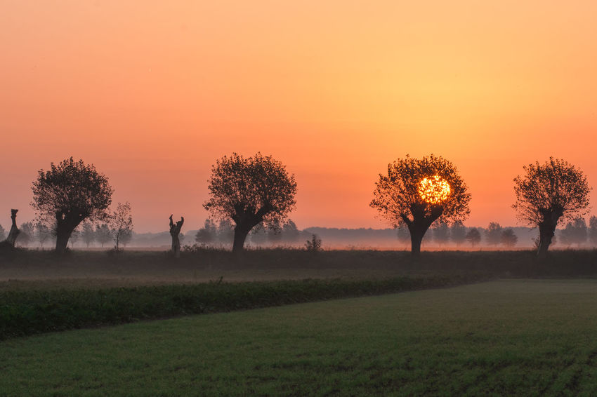 Sony A700 EyeEm Best Shots EyeEm Market © Getty Images Nature Scenic Landscapes Sunrise Zeeuws Vlaanderen Zeeland  The Netherlands EyeEm Premium Collection