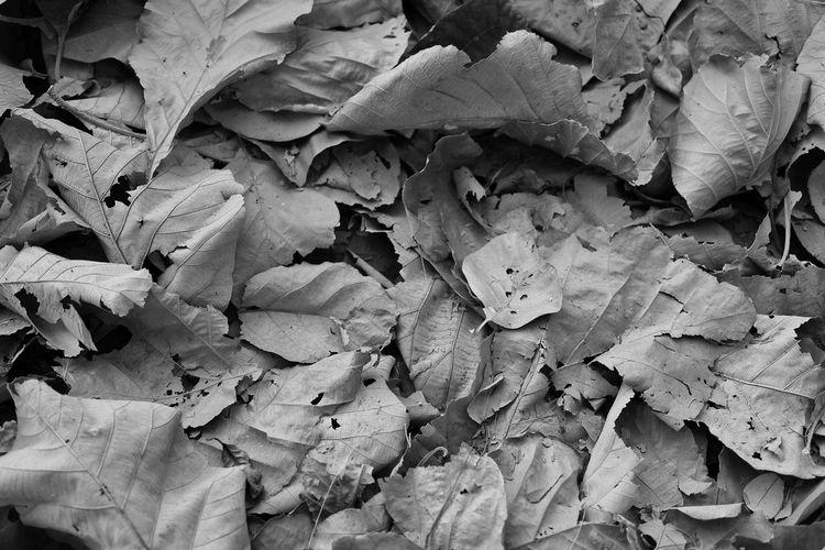 Full frame shot of dried leaves on field