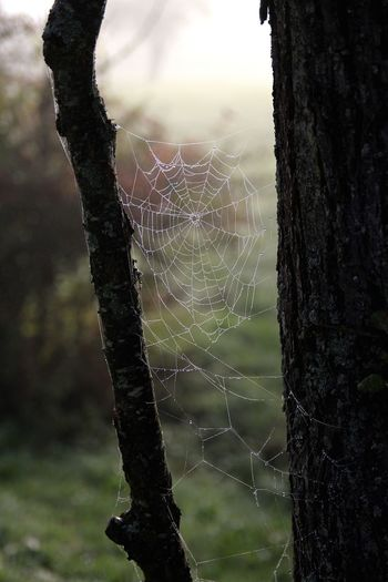 Spider web in the morning with dew drops Autumn Autumn Mood Beauty In Nature Branch Close-up Complexity Coweb Day Dew Dew Drops Focus On Foreground Fragility Intricacy Morning Mood Morning Nature  Nature No People Outdoors Spider Spider Web Spider Web And Rain Survival Tree Vertical Web