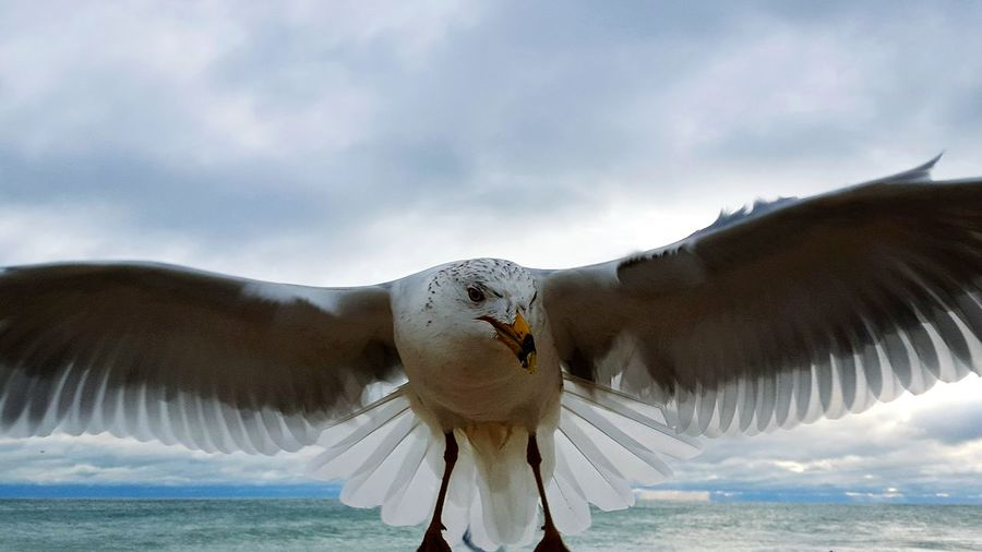 Close-Up Of Seagull Against Cloudy Sky