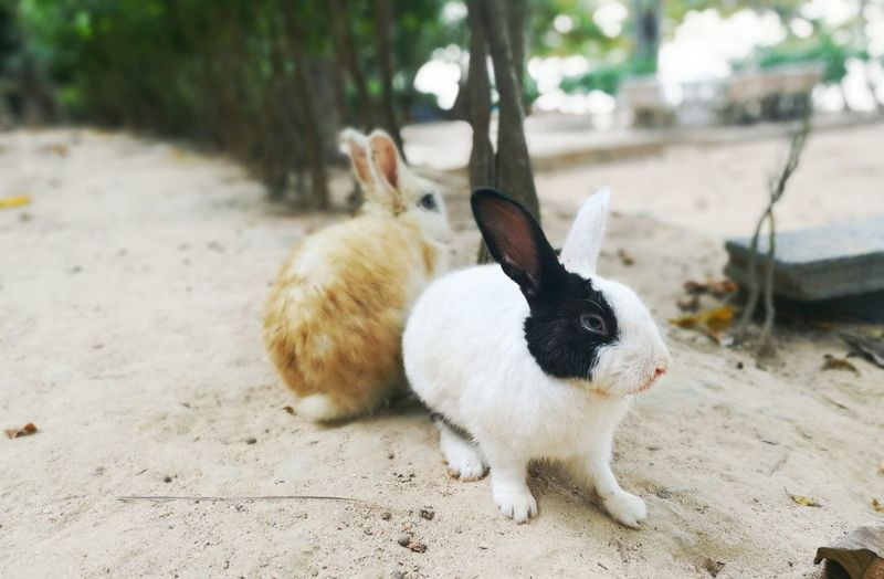 View of rabbits
