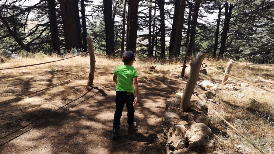 Full length of boy standing by trees in forest