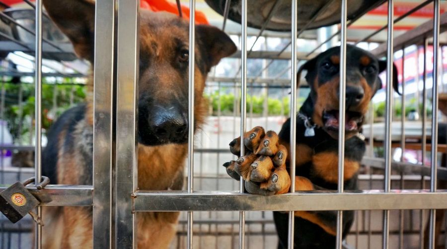Close-up of dogs in cage