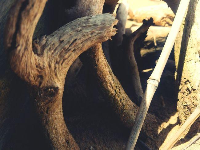 Bamboo Check This Out My Island ❤️ Samsung Galaxy S7 Eyeem Photography Puerto Rico EyeEm Team My Island PUERTO RICO Eyeem Puerto Rico EyeEm Photography Wood On The Sea