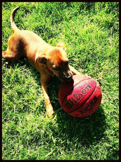 My Dog Foxie