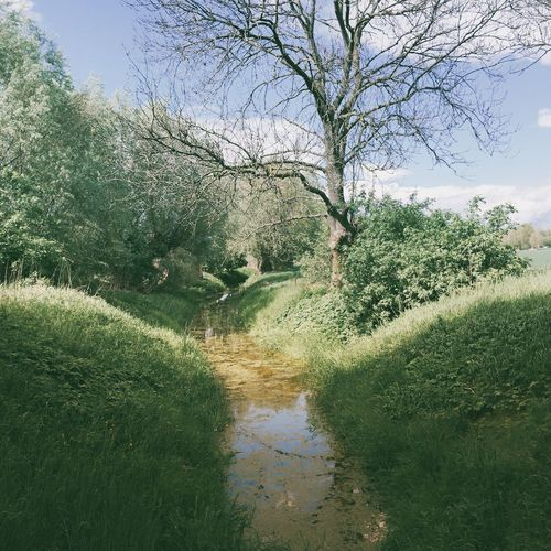 Trees growing in pond