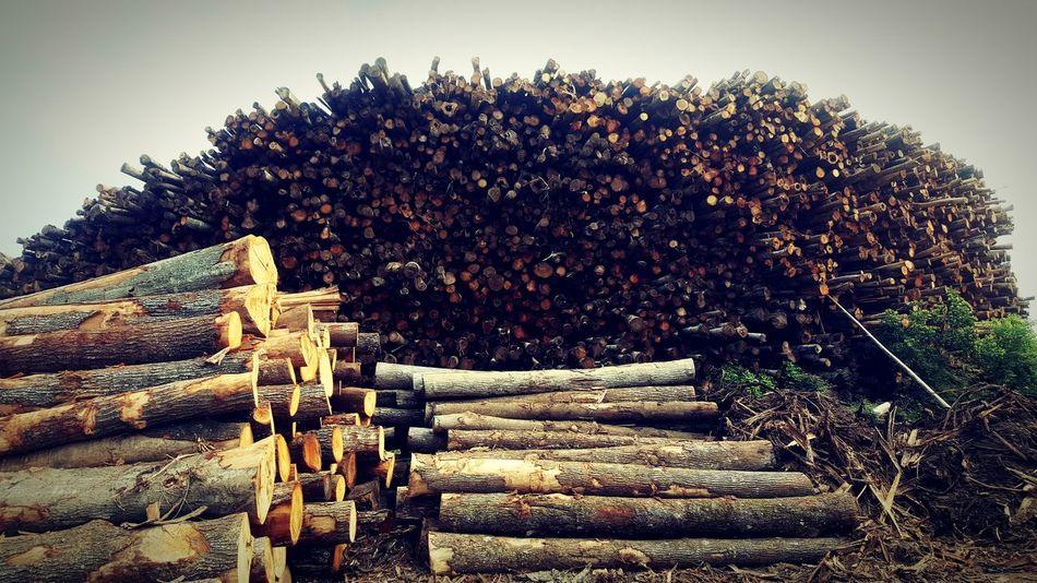 Lumber Industry Lumber Lumber Mill