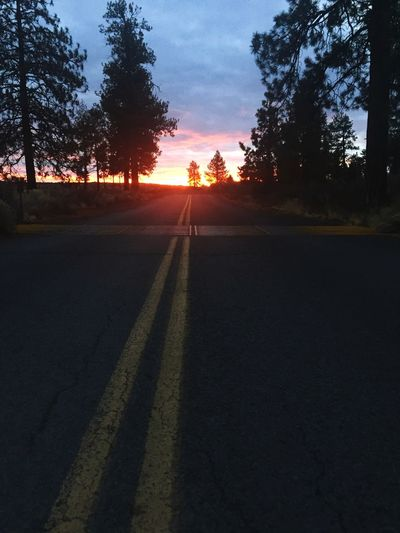 Sunrise over cattle guard along forest road Cattle Guard Sunrise Sunset Road Tree Nature Sun Sunlight No People Scenics Sky Transportation Beauty In Nature Outdoors