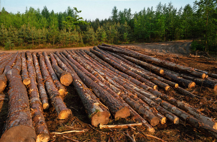 Block Clogs Cutting Cutting Trees Deforestation Deforestation Effect Deforestration Environment Environmental Damage Environmental Issues Forest Log Logs Nature Nature No People No People, Outdoors Stack Timber Tree Tree