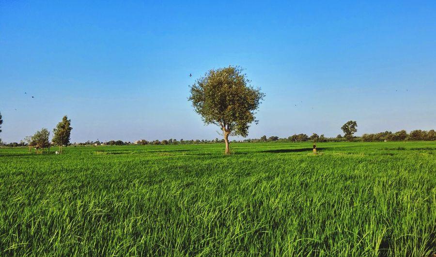 Greenlife Landscape Trees Farmer Egypt Real Beauty  Nextlevelshit
