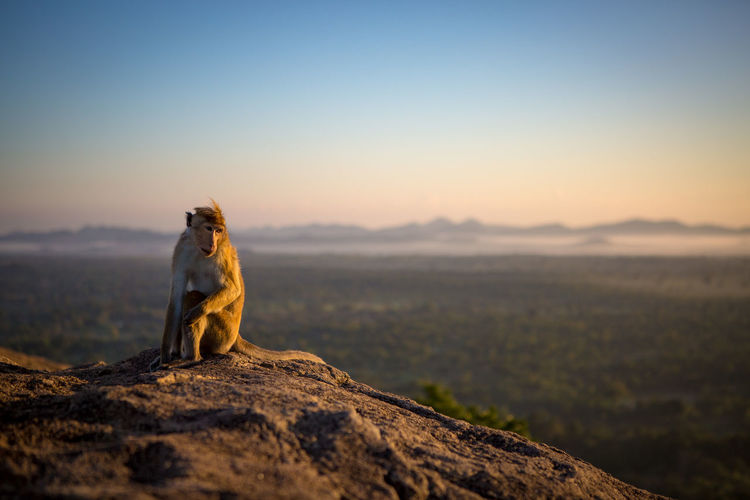 Monkey Sitting On Mountain Against Sky During Sunrise