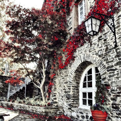 Tree Architecture Building Exterior Built Structure Outdoors No People Red Prizma Photo Photography Germany Prismacolor