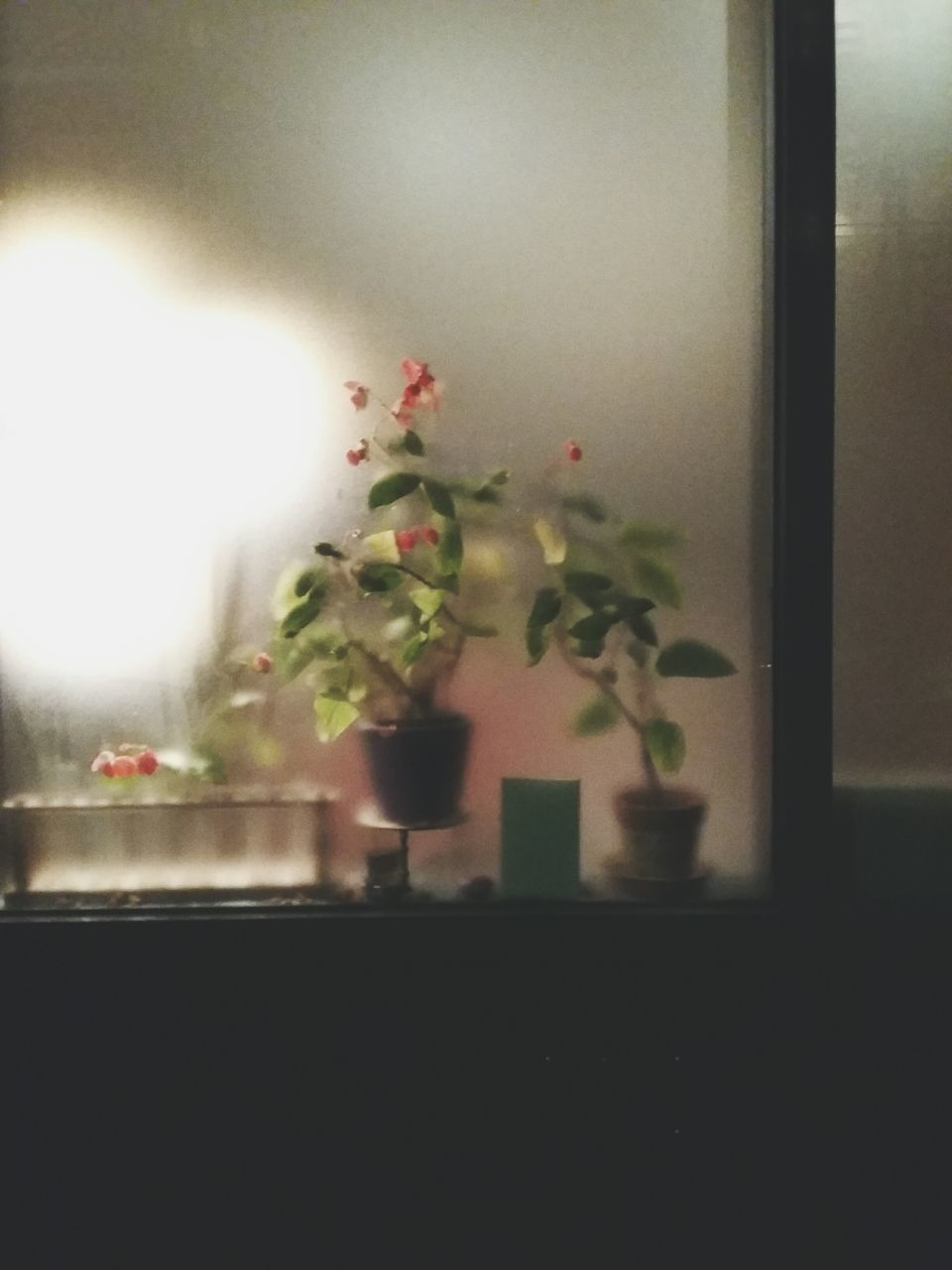 flower, growth, indoors, plant, vase, no people, nature, freshness, close-up, day