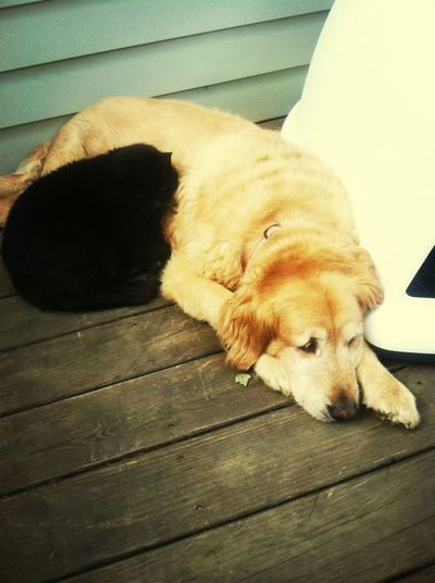 My Cat And Dog Are Adorable