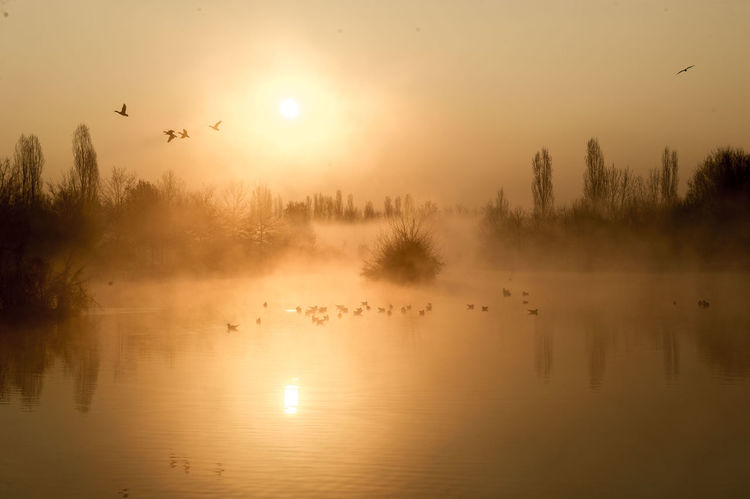 Animal Themes Animals In The Wild Beauty In Nature Bird Day Flying Lake Nature No People Outdoors Reflection Scenics Silhouette Sky Sun Sunlight Sunset Tranquil Scene Tranquility Tree Water