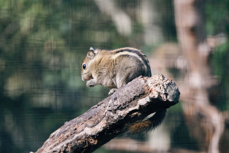 Side View Of Squirrel On Branch