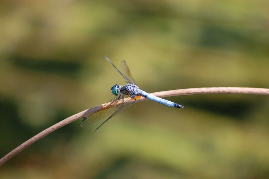 Insect Dragonfly No People Color Of Life! Nature Beauty In Nature Outdoors