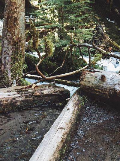 Tree Trunk Tree Nature Outdoors Water Growth Beauty In Nature Forest Landscape Backgrounds Scenery Scenics Tranquil Scene Moss Layers And Textures Springtime Driftwood Trees