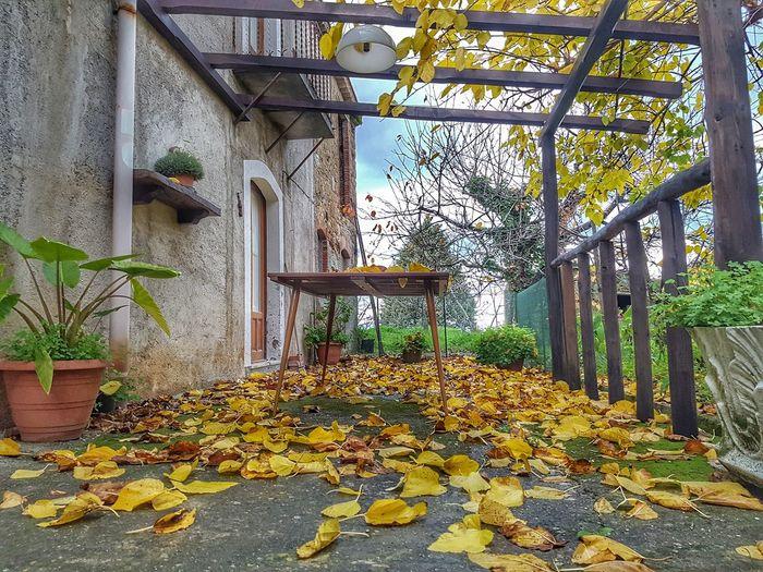 Autumn leaves against trees