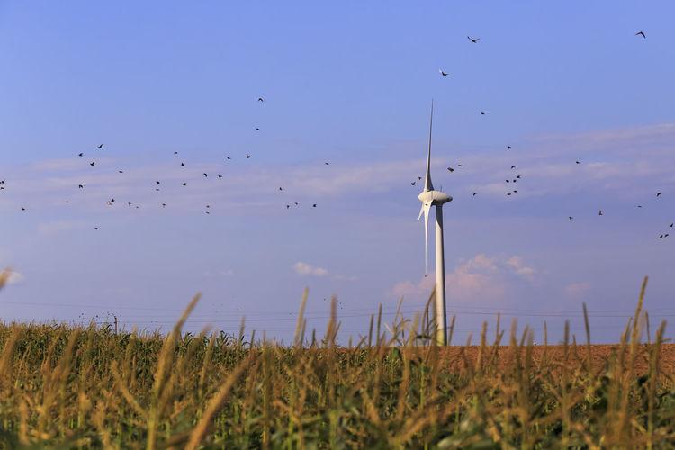 Flock of birds flying over land