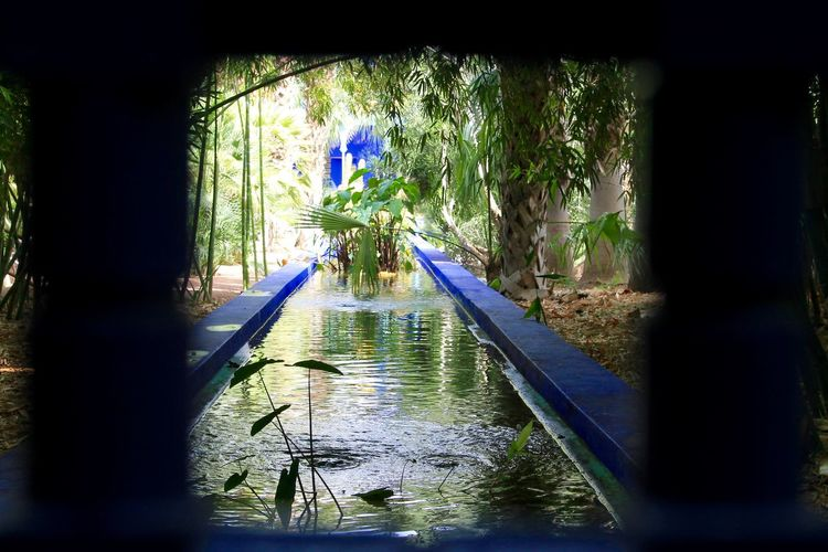 POV Blue Canal Day EyeEm Nature Lover Garden Garden Photography IAmGSPhotography Lifestyles Marrakesh Morroco Nature Plant Pond POV Reflection Rippled Tree View Water Water Reflections Travel Travel Photography