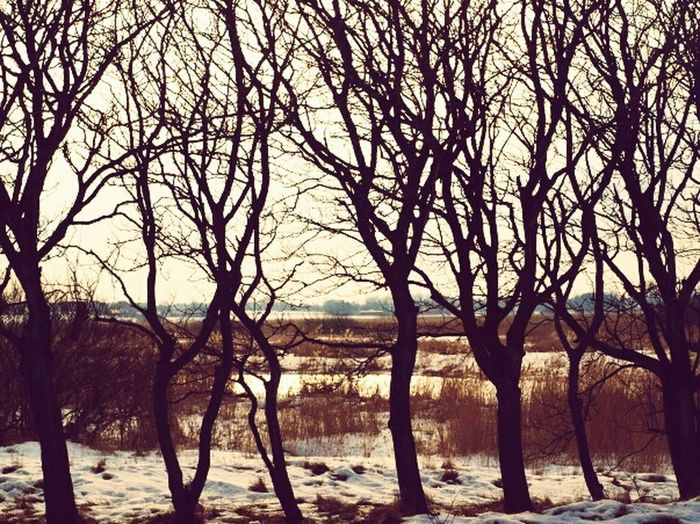 Nature Branches Naked Trees Winter Snow Contrast