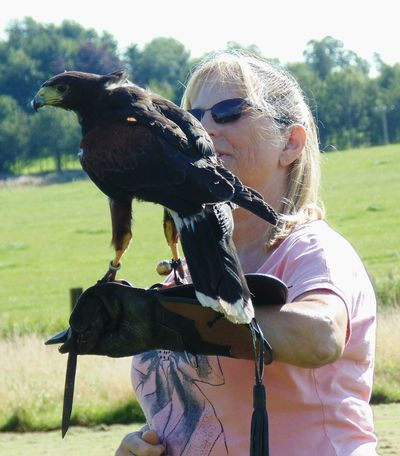 Falconry Harris Hawk  Animal Wildlife Bird Day Females Field Hairstyle Leisure Activity Lifestyles Nature One Animal One Person Outdoors Plant Real People Sunlight Three Quarter Length Vertebrate Women