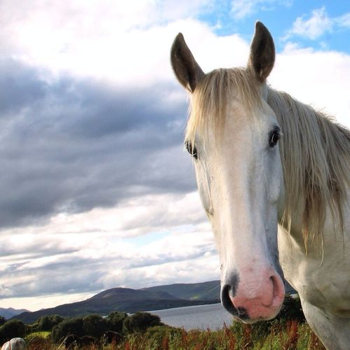 Connamera Pony. Cliften Ireland. For Michelle a little smiler to cheer her up in her sick bed. Get well quick, August is not that far away when we'll ride the Connamara Way with your American friends. @Hankanon. EyeEm Nature Lover Tadaa Community Horse Love Enjoying Life