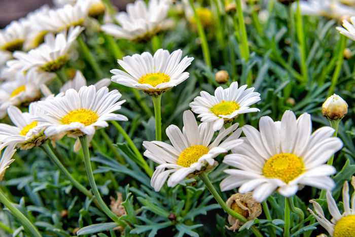Blossoms  Cheerfulness Flower Green Mothers Day Muttertag Thank You ❤ Vivi We Love You ❤ White Blossoms Green Leaves