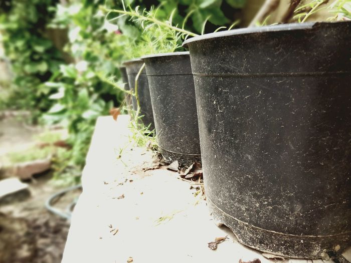 Taking Photos Mypointofview Garden Photography DayTimePhotography Garden Photography Garden Love Plants 🌱 Close-up Plastic Pot Plastic Pots Garden Pot Garden Pot And Plant Garden Pots Black Pot Low Section Low Angle View