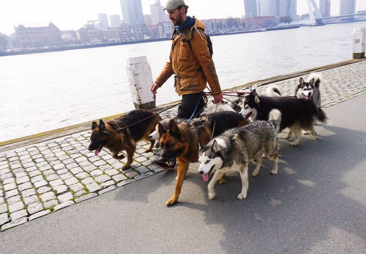 Man with dog walking on street in city