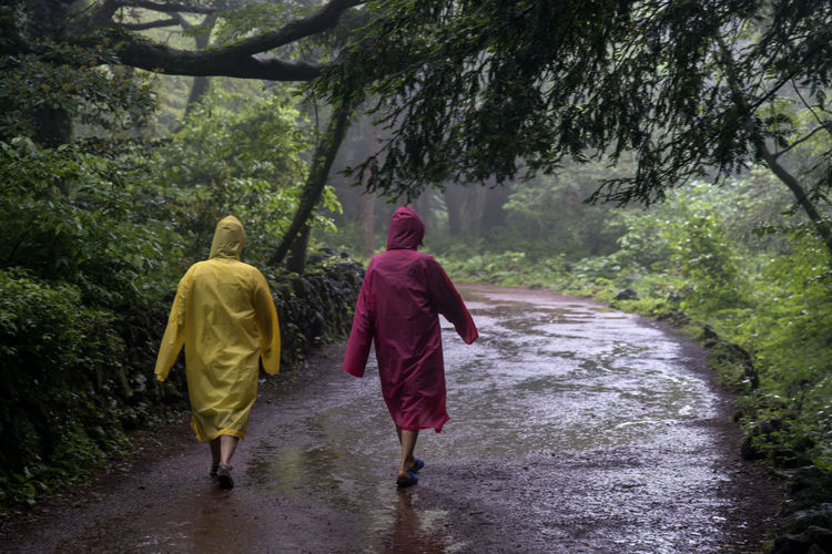 rainy day of Bijarim which is a famous forest in Jeju Island, South Korea Adult Bijarim Day Forest Friendship Full Length JEJU ISLAND  Men Nature Outdoors Pathway People Rain Real People Rear View Red Togetherness Tree Two People Walking Water