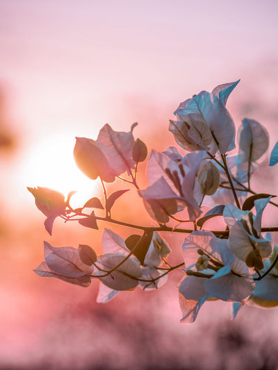 love love Close-up Focus On Foreground Flowering Plant Flower Plant Beauty In Nature Freshness Vulnerability  Petal Fragility No People Growth Flower Head Inflorescence Nature Outdoors Selective Focus Valentine's Day  Valentine Pink Color Love Silhouette Photo My Best Photo