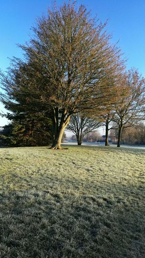 Beautiful nature Beauty In Nature Blue Sky Day Frost Frosty Growth Nature ND Productions No People Outdoors Tree Winter Wintertime