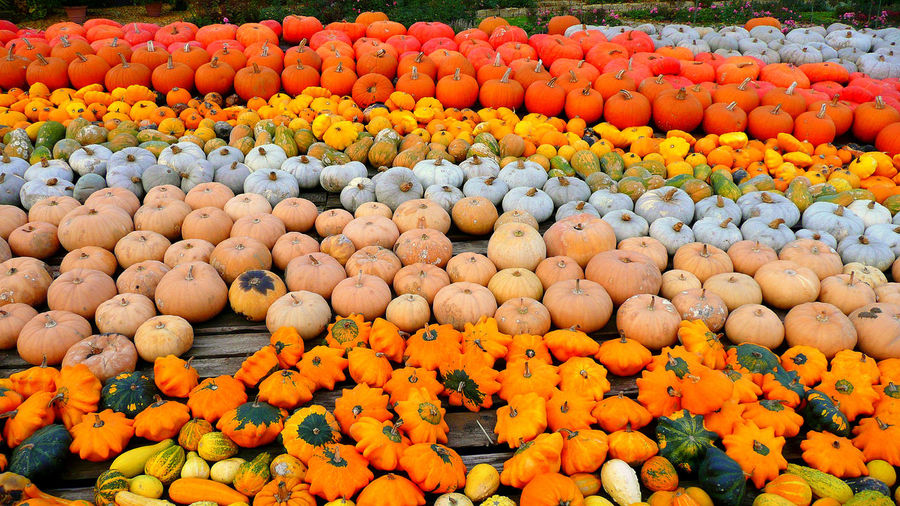 Abundance Backgrounds Citrus Fruit Day Food Food And Drink Freshness Fruit Full Frame Healthy Eating High Angle View In A Row Large Group Of Objects No People Orange Orange Color Order Outdoors Pumpkin Religion Vegetable Wellbeing