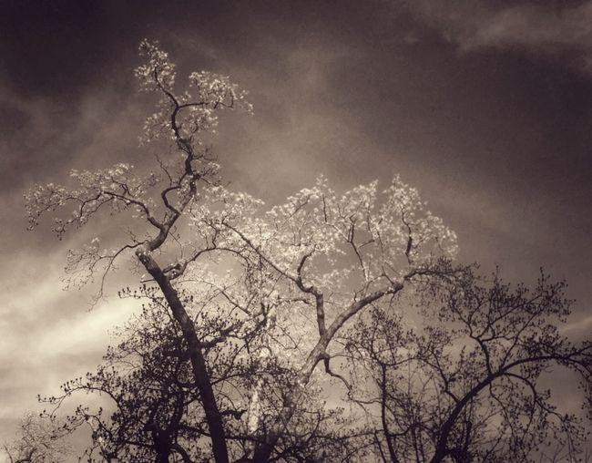 Nature Landscape Trees AMPt_community