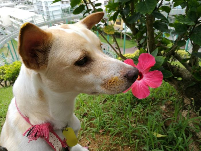 Dog Pets One Animal Domestic Animals Mammal Animal Themes Day Outdoors No People Close-up Flower Nature Protruding