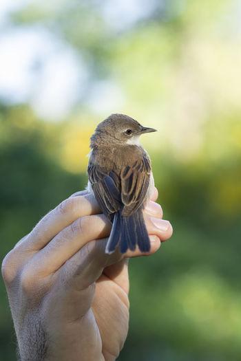 Close-up of hand holding bird