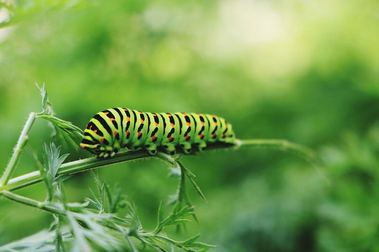 Close-up of caterpillar crawling on stem