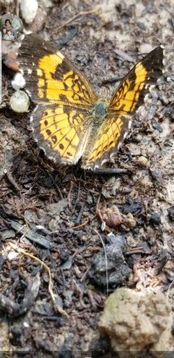 Messages To Heaven Nature Butterfly Freedom New Beginnings Good Luck Spirit Guide Yellow Butterfly - Insect Leaf High Angle View Close-up