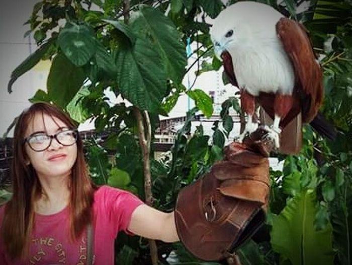 My spirit animal Free Freedom Eagle Portrait Front View