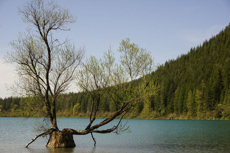 Rattlesnake lake in North Bend, Washington Peace Rattlesnake Lake Washington Bare Tree Beauty In Nature Branch Day Driftwood Evergreen State Growth Lake Land Nature No People Non-urban Scene Outdoors Plant Scenics - Nature Sky Sunset Tranquil Scene Tranquility Tree Water Waterfront The Great Outdoors - 2018 EyeEm Awards