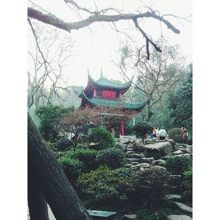 湖南 长沙 爱晚亭 岳麓山 hunan changsha vsco vscocam